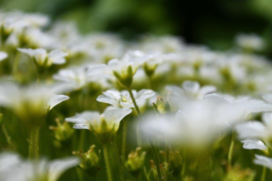 Цветы - Мария Юртаева