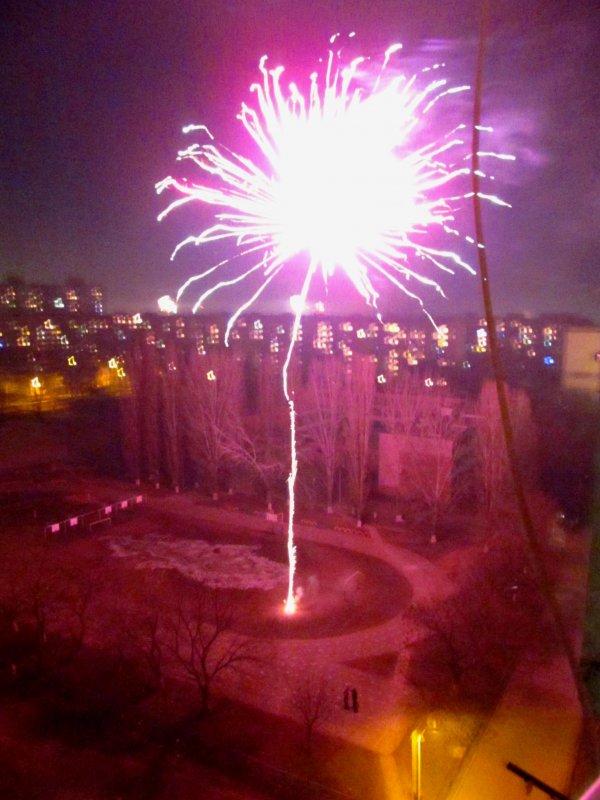 Новогодний Цветок - AV Odessa