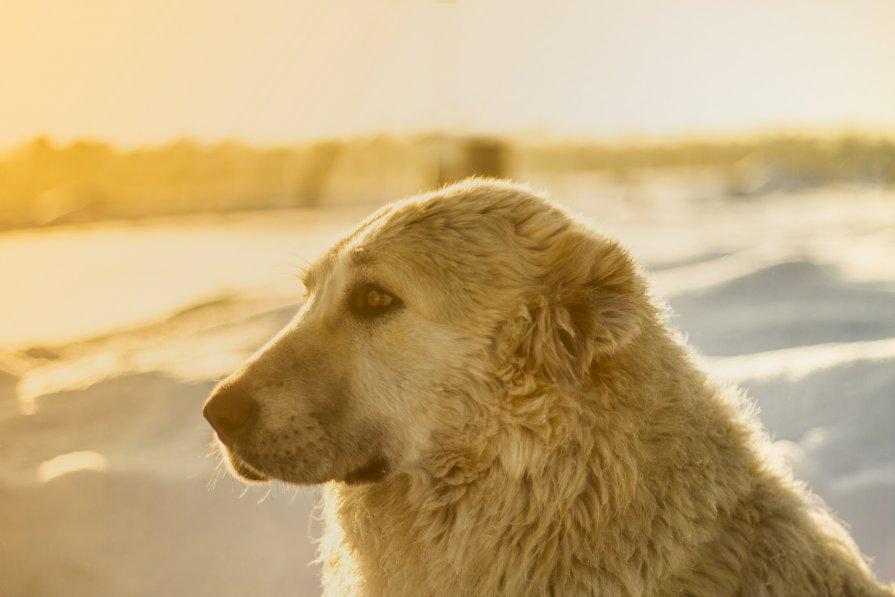 Медвед - Алексей Кепычъ