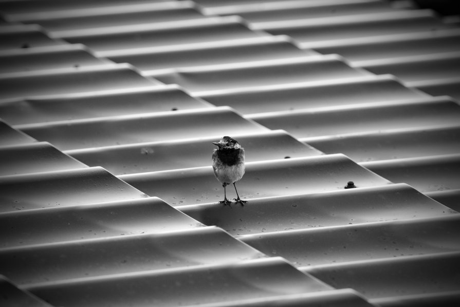 Не орел ) - Андрей Саенко