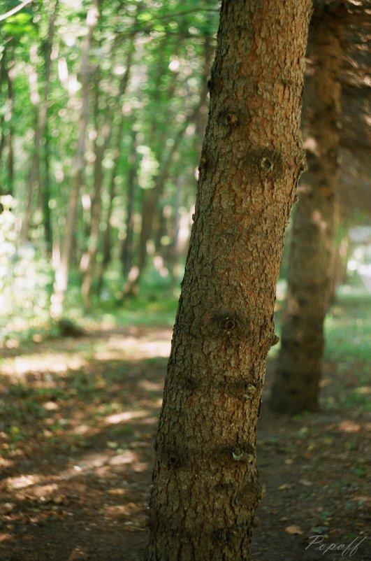 Как же хорошо в сосновом лесу... - Sergey Popoff