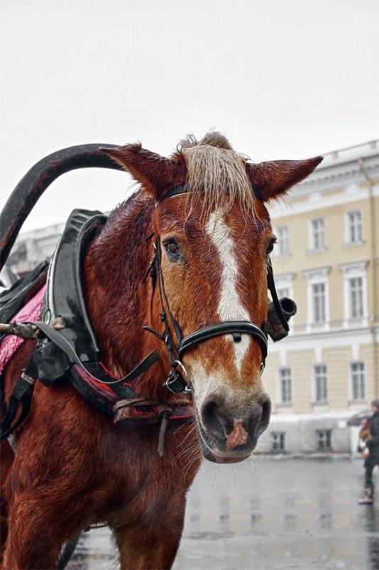 конь - Андрей Маслов