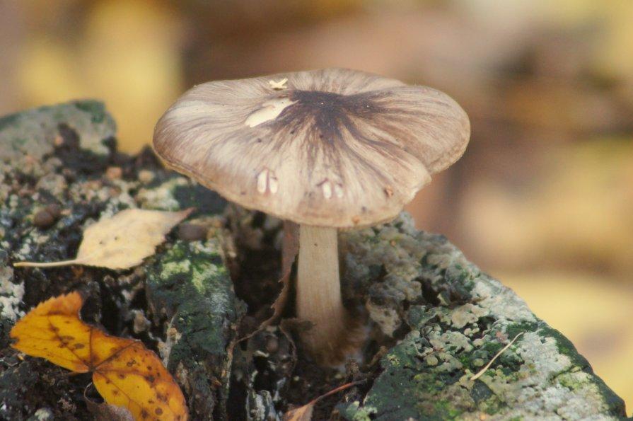 Деревянный гриб - Александр Жабров