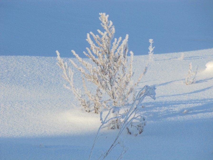 Маленькое зимнее деревце - Димарик Лакман