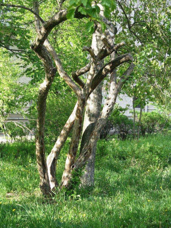 Деревья в моем дворе - Виктория Мароти
