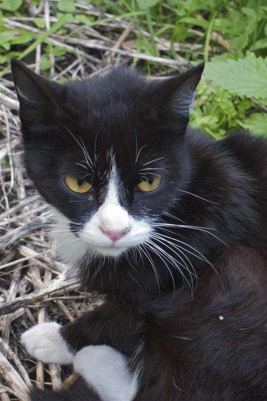 Чёрный кот - Leonid Volodko