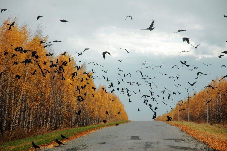 Осенью в Лысогорском районе в Саратовской области - Игорь Чижов