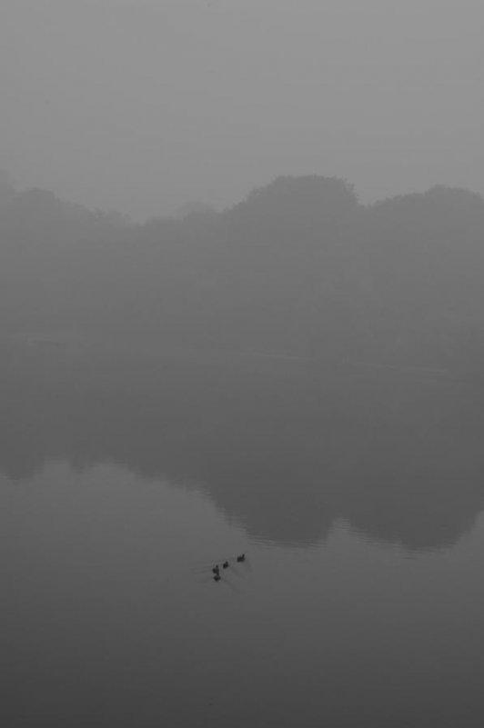 Туман - Алексей Ярошенко