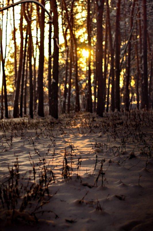 В лесу - Даниил Евтухов