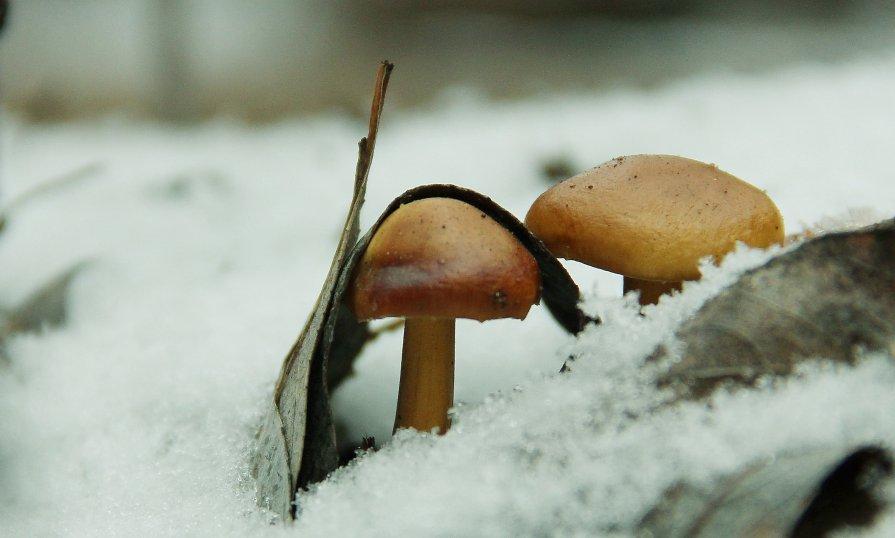 первый гриб 2013 - Света Солнцева