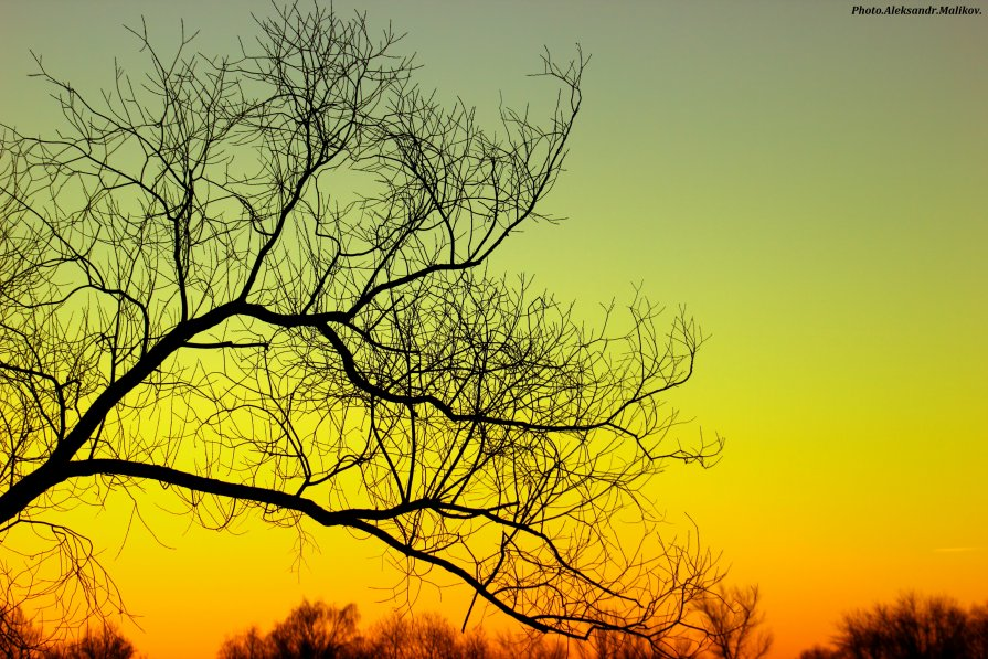 зеленый закат - Александр Маликов