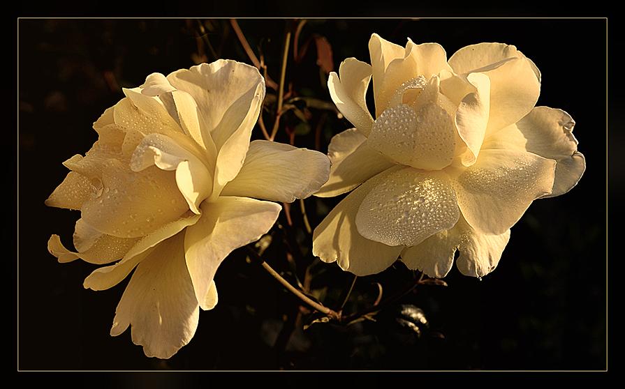 Фото грустный цветок