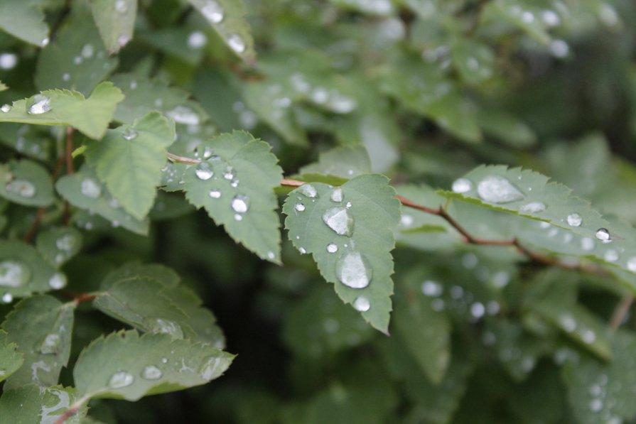 капли дождя - наталья якушева