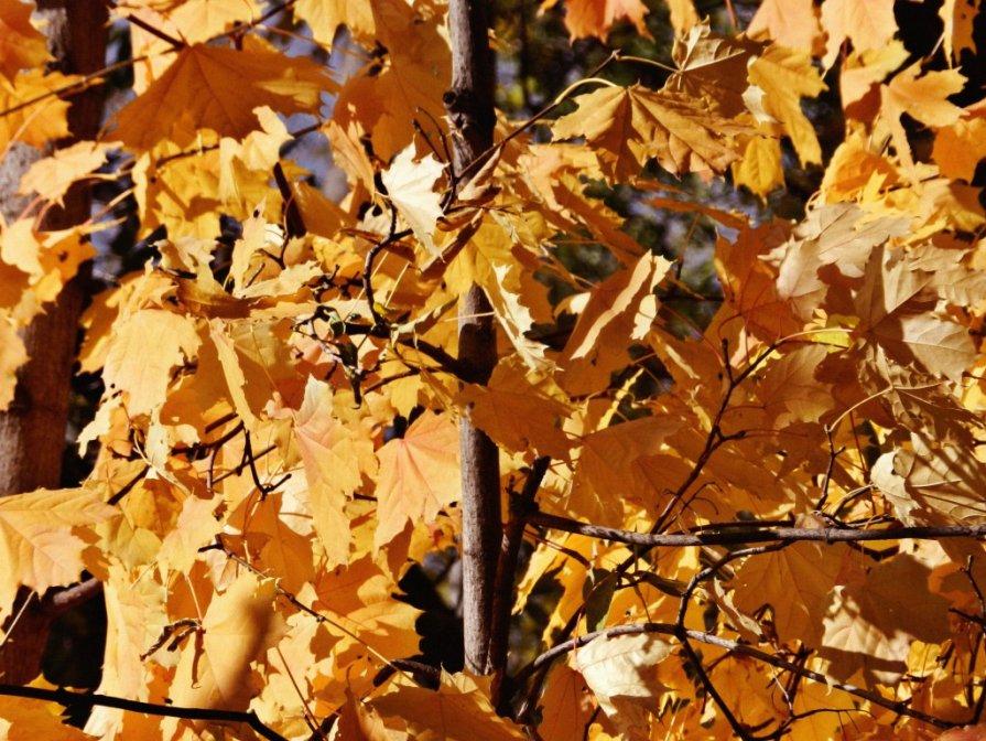 Осень - Александра Румянцева