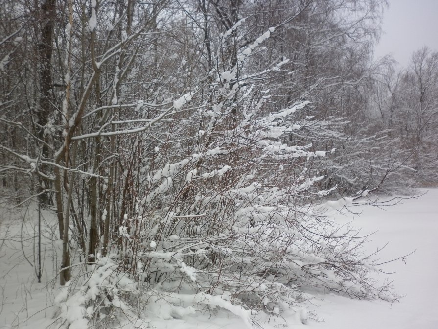 Зарисовка зимнего леса. - Александр Юнусов