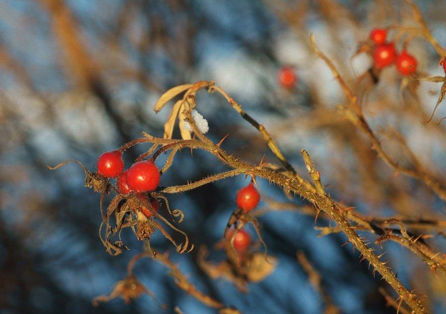 Зимние ягоды - Екатерина Тумовская