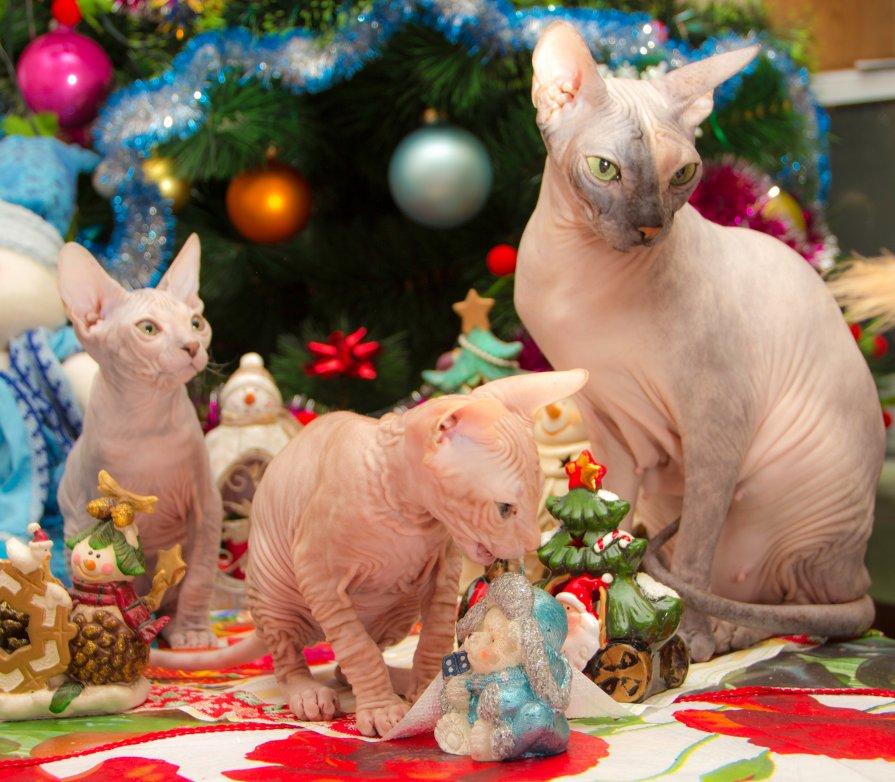 Новогодние котейки - Илья Орлов