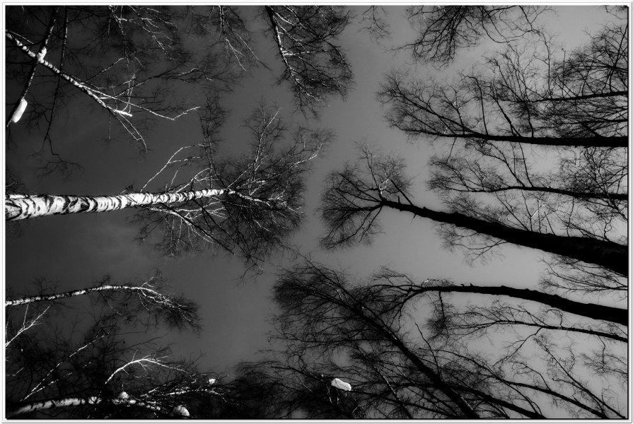 вершки ( свет и тень) - Роман Капустинский