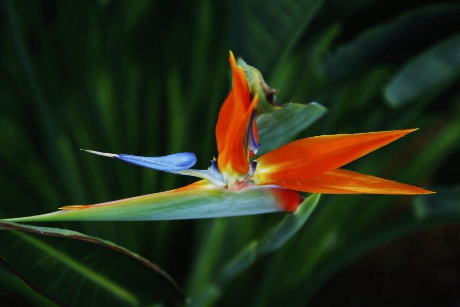 Kraski Tenerife - Olga Lumi