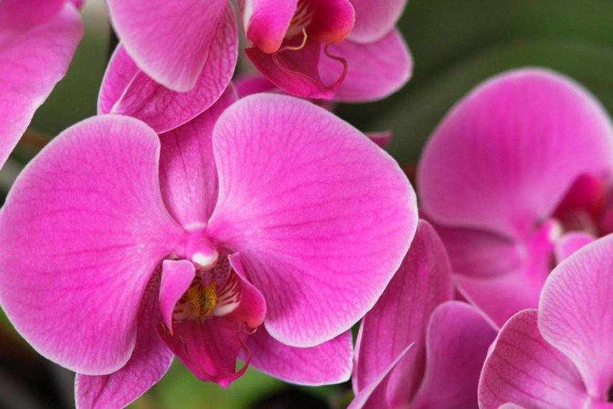 Орхидеи - Olga Lumi