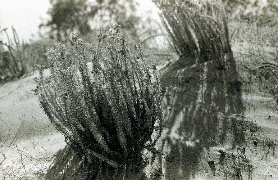 Морские травы - Alexander Reiz