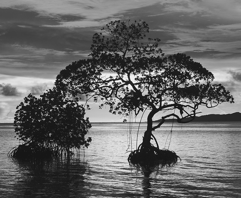 sea tree - Irek Shamanaev