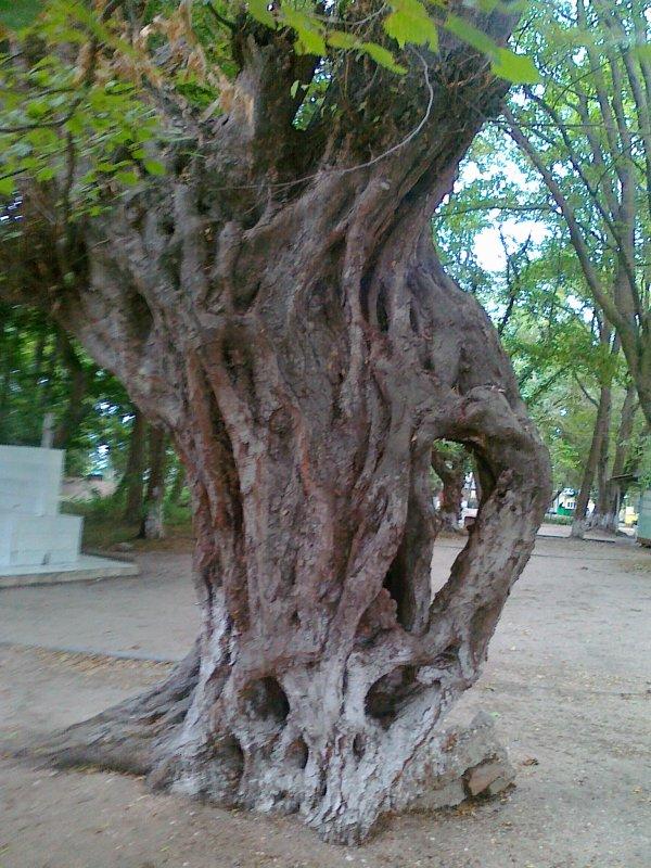 Чудо-дерево - Лада Замараева