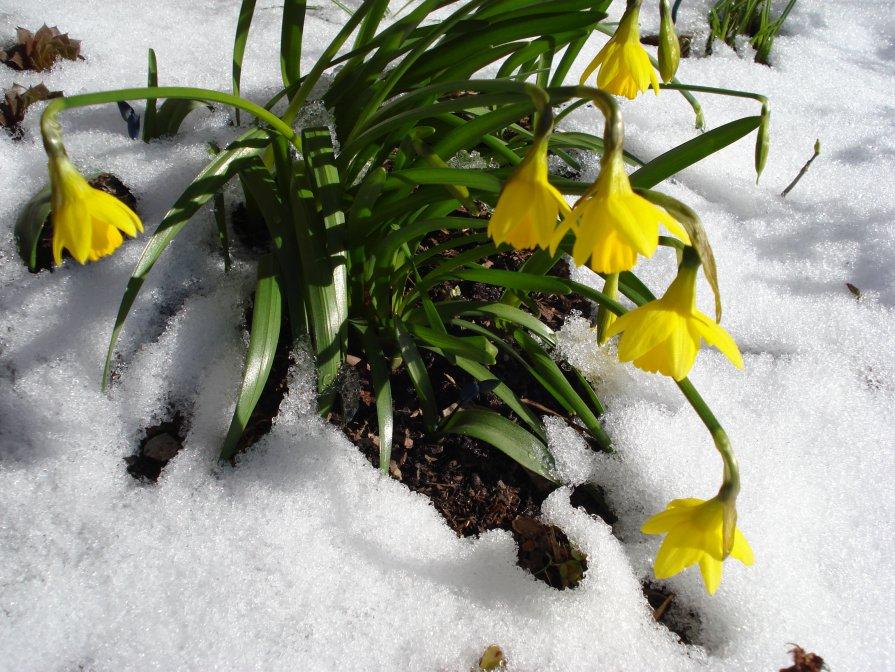 снег весной - Татьяна Орнес