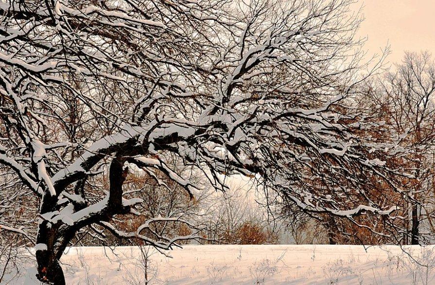 пойма зимой... - Павел Бутенко
