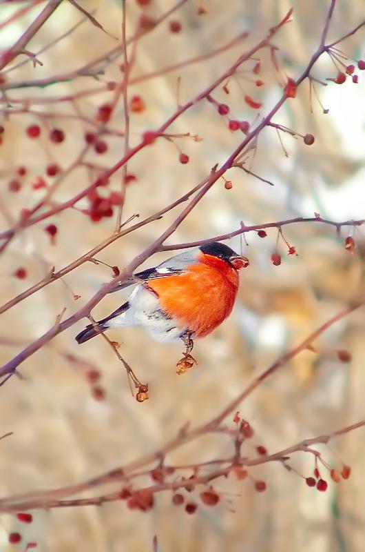 Редкая птица в городе - Юрий Неганов