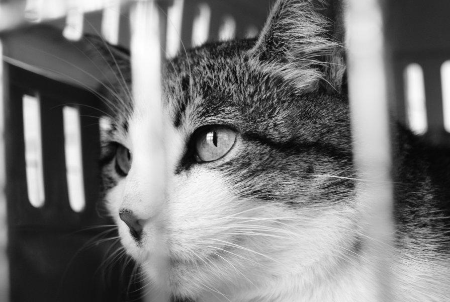 Кот в питомнике - Илья Спицын
