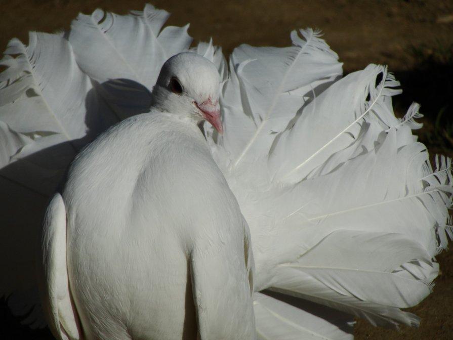 птица мира - Дмитрий Яшин