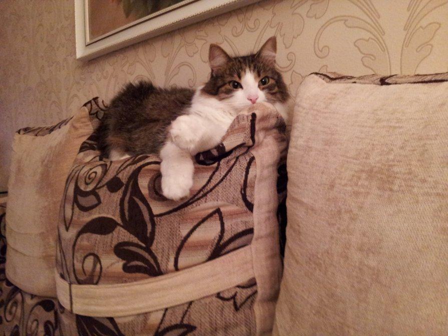 Кошка - Маргарита Степанчук