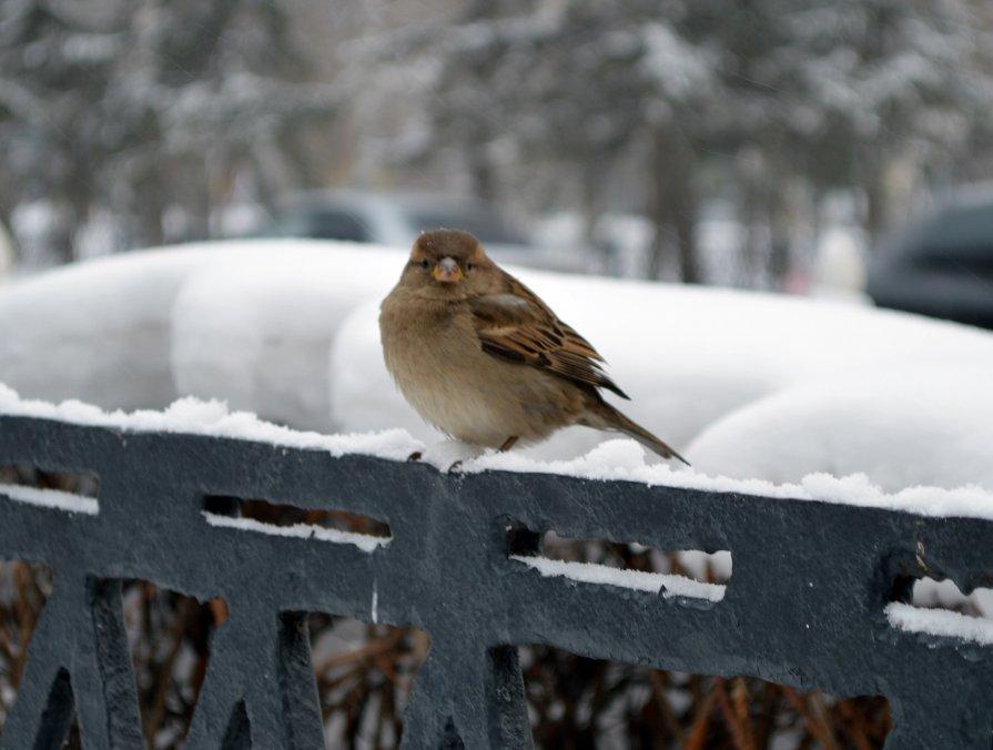 Птичка*_* - Ильназ Габбасов