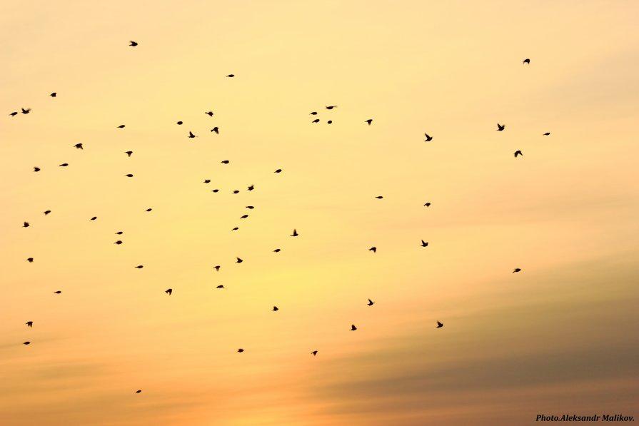 полетели на закате - Александр Маликов