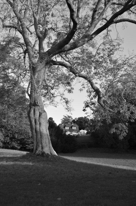 tree - inna mac