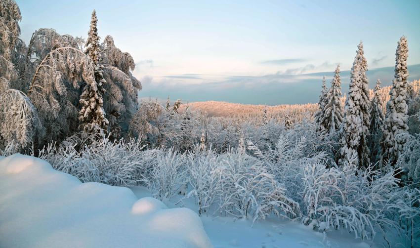владения Зимы - Pavel King