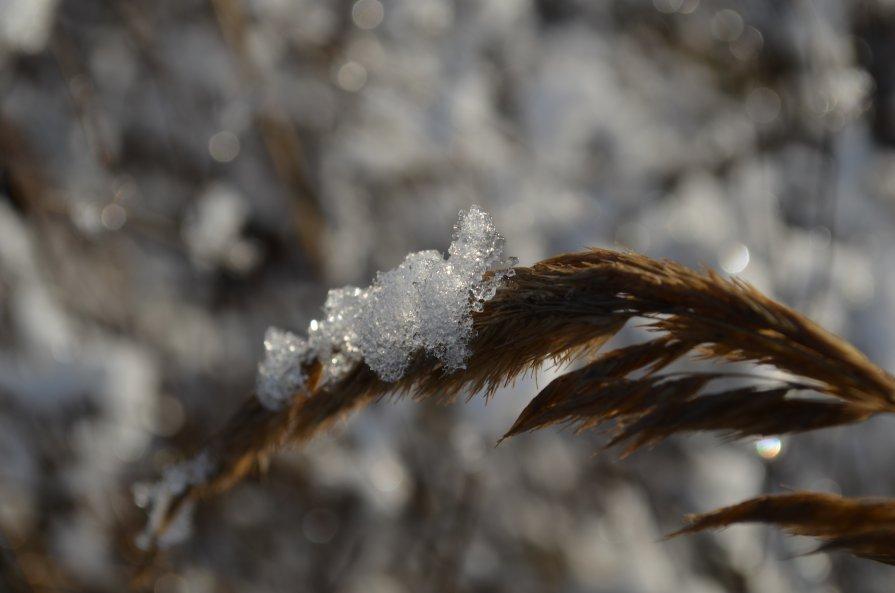 Начало зимы - Андрей Бельский