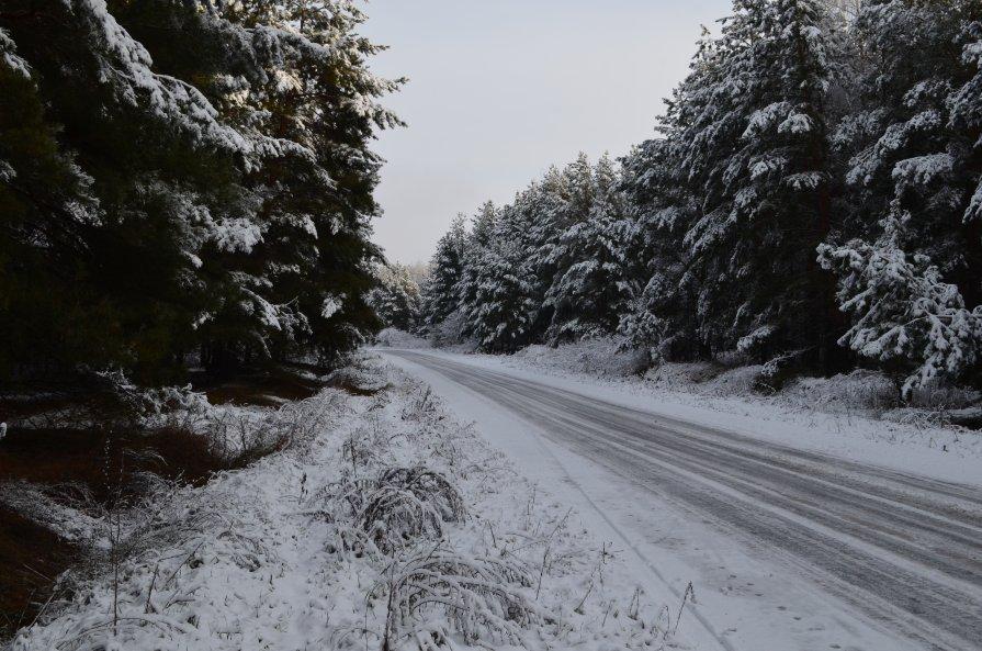 Дорога в Карамышево - Андрей Бельский