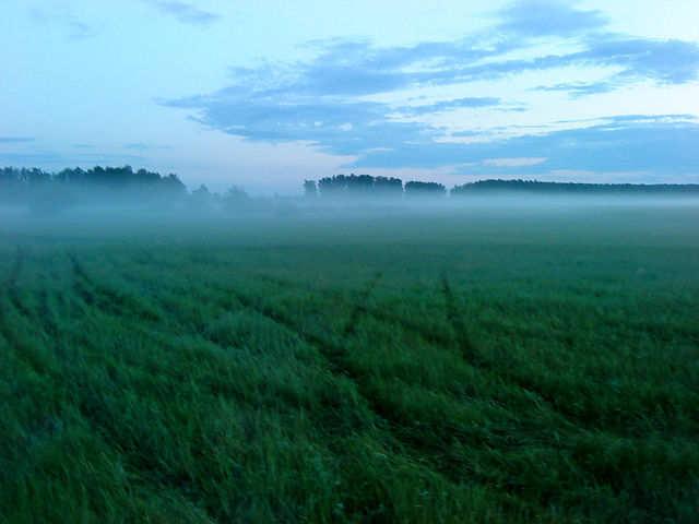 утро туманное...... - андреа моор
