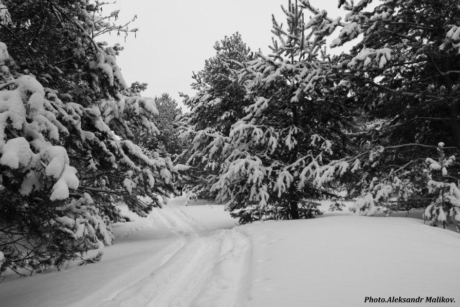 Заснеженный лесю - Александр Маликов