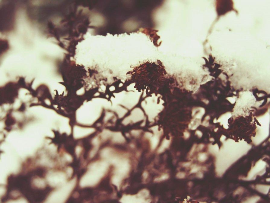 снежок - Ева Вейт