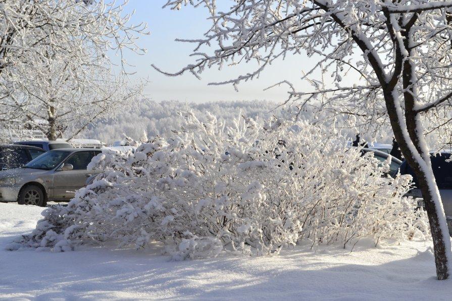 снежный ежик - Елена Баландина
