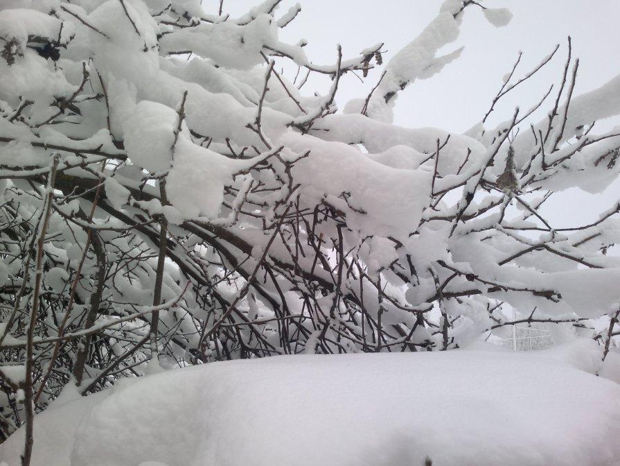 Снег на ветках. - Павел Михалев