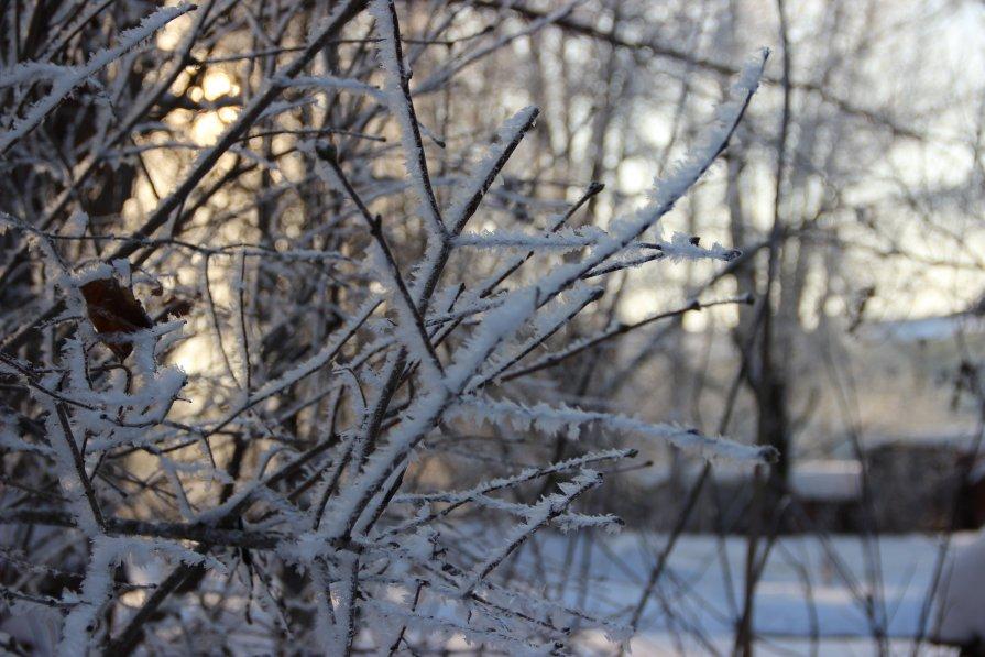 Тёплая рождественская зима - Альбина Хамидова