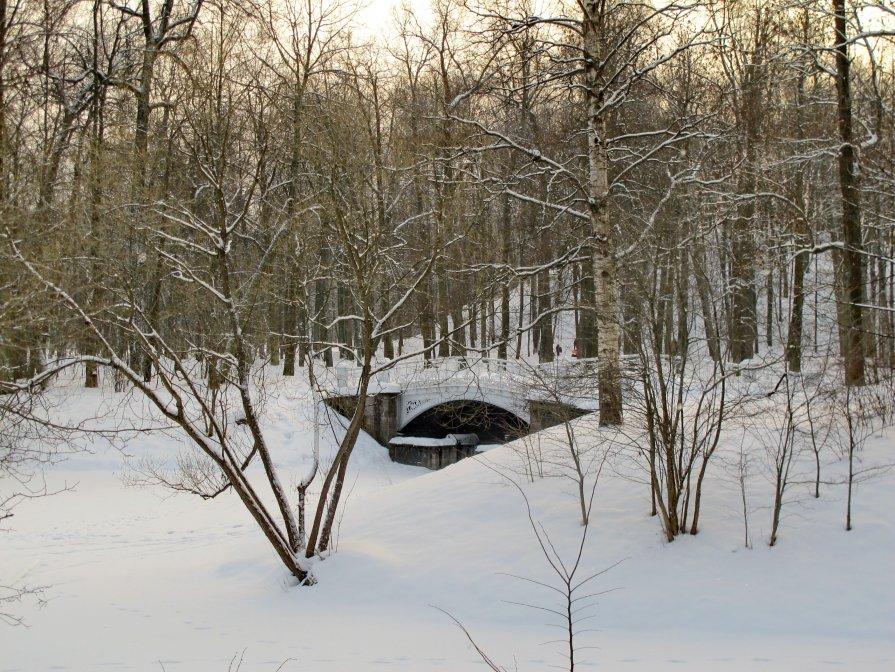 Царскосельская зима - Олег Попков