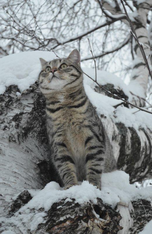 Мой нежный, снежный барс - Анна Румянцева