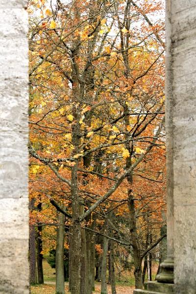Окно в осень - Наталия Зыбайло