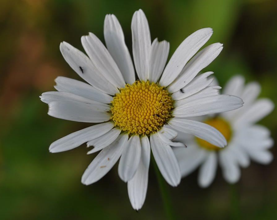 цветок - Олег Сливанков