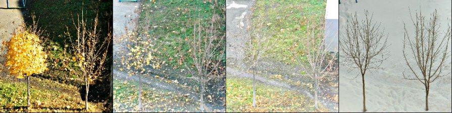 Осень-Зима - Анжелика Судникова